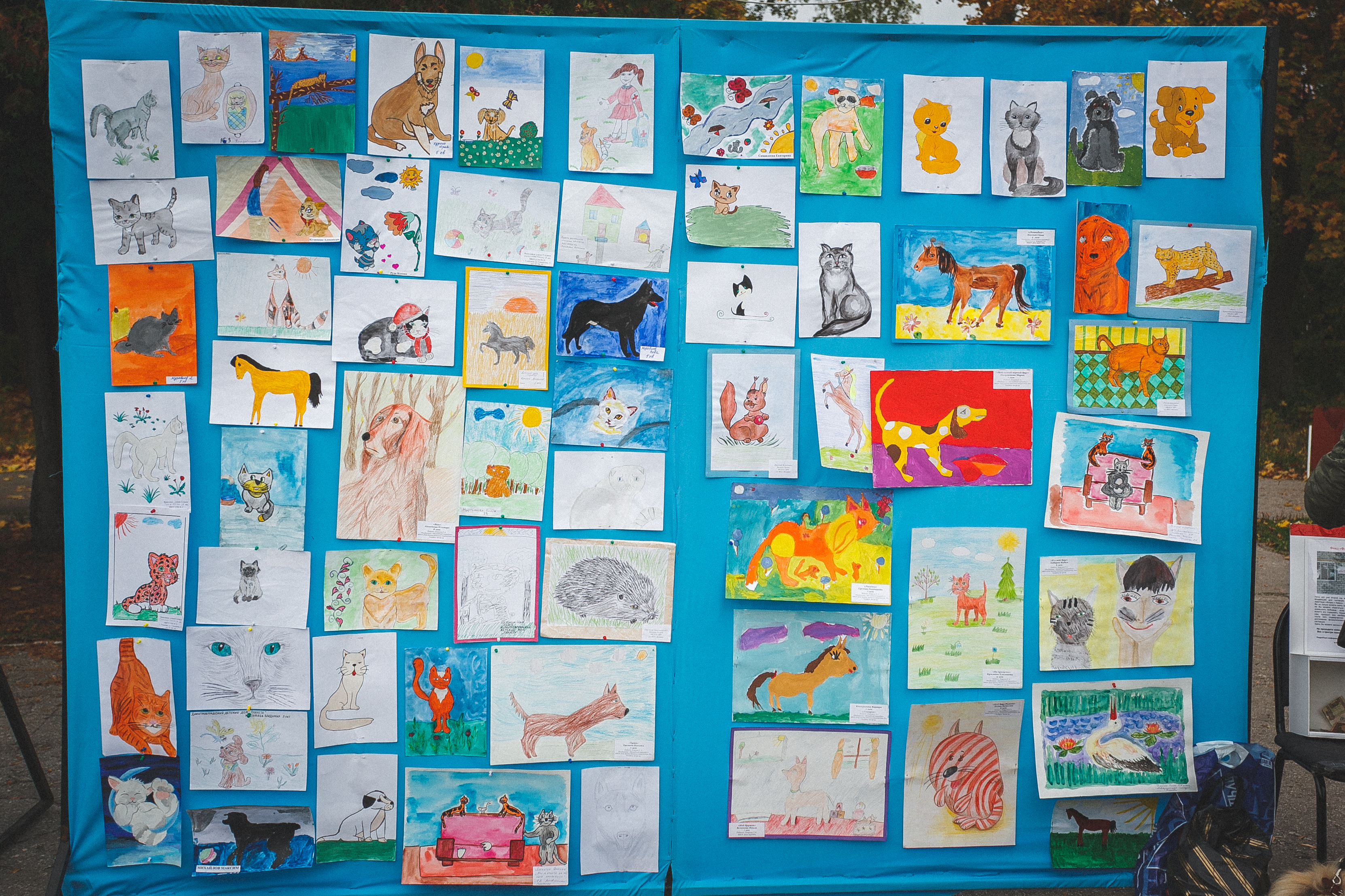 Подведены итоги вернисажа творческих работ «День защиты животных»